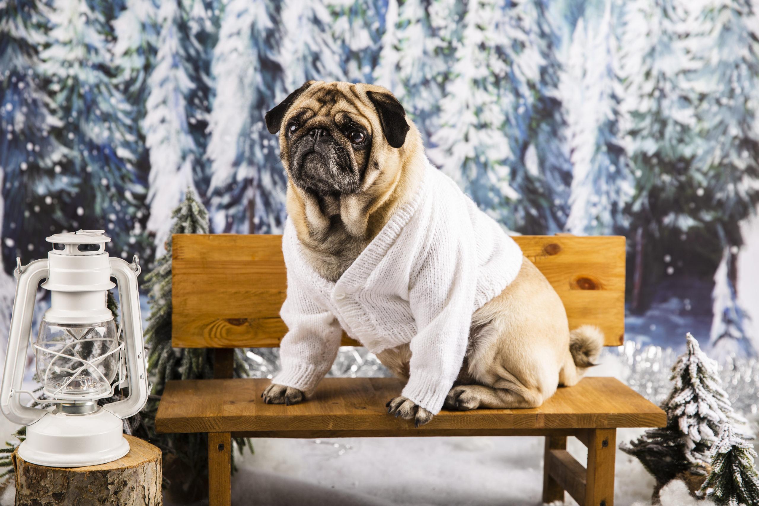 Hundebody – Das sollten Sie zum Schutz von Wunden ihres Vierbeiners wissen