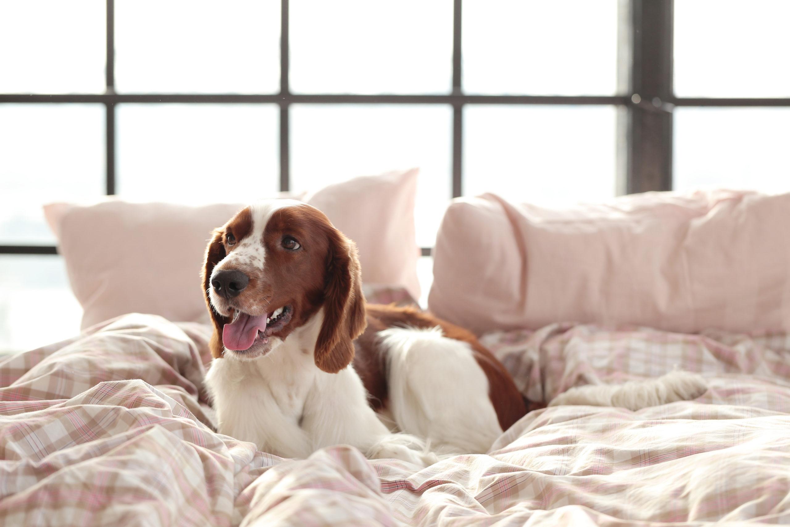 Hundebett – 5 Tipps für einen gesunden Hundeschlaf