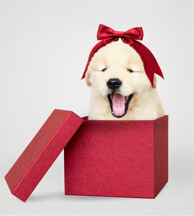 Hundetransportbox – Wie transportiert man einen Hund richtig?