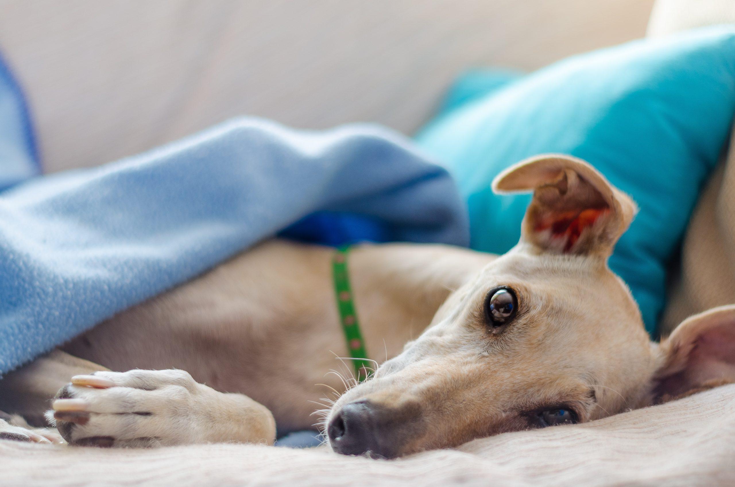 Hundegesundheit, Wurmkur, Durchfall & Co – Das sollten Sie beachten