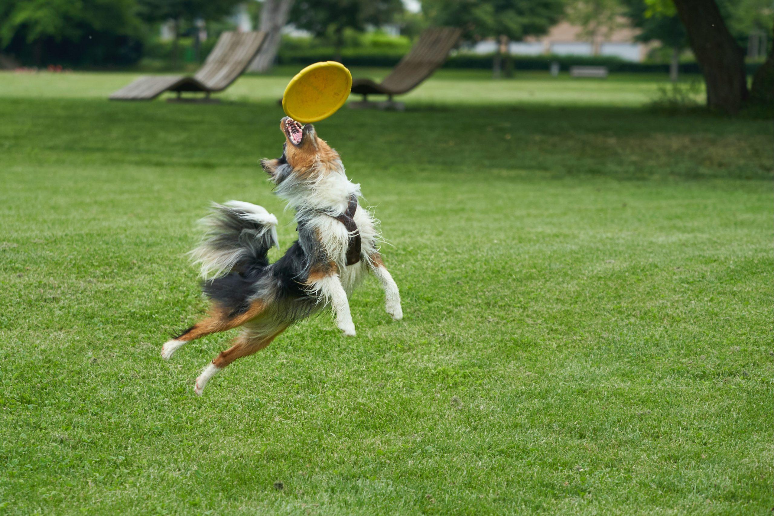 """Die Top 5 Hundespielzeuge – Ein """"must have"""" für die Entwicklung der Intelligenz"""